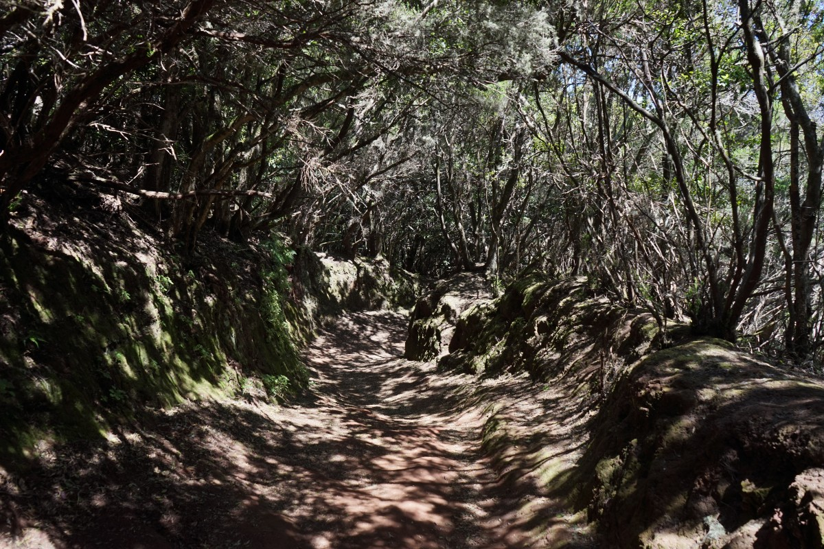 trail_away_path_tenerife_anaga_landschaftspark_parque_rural_de_anaga_anaga_anaga_mountains-930769